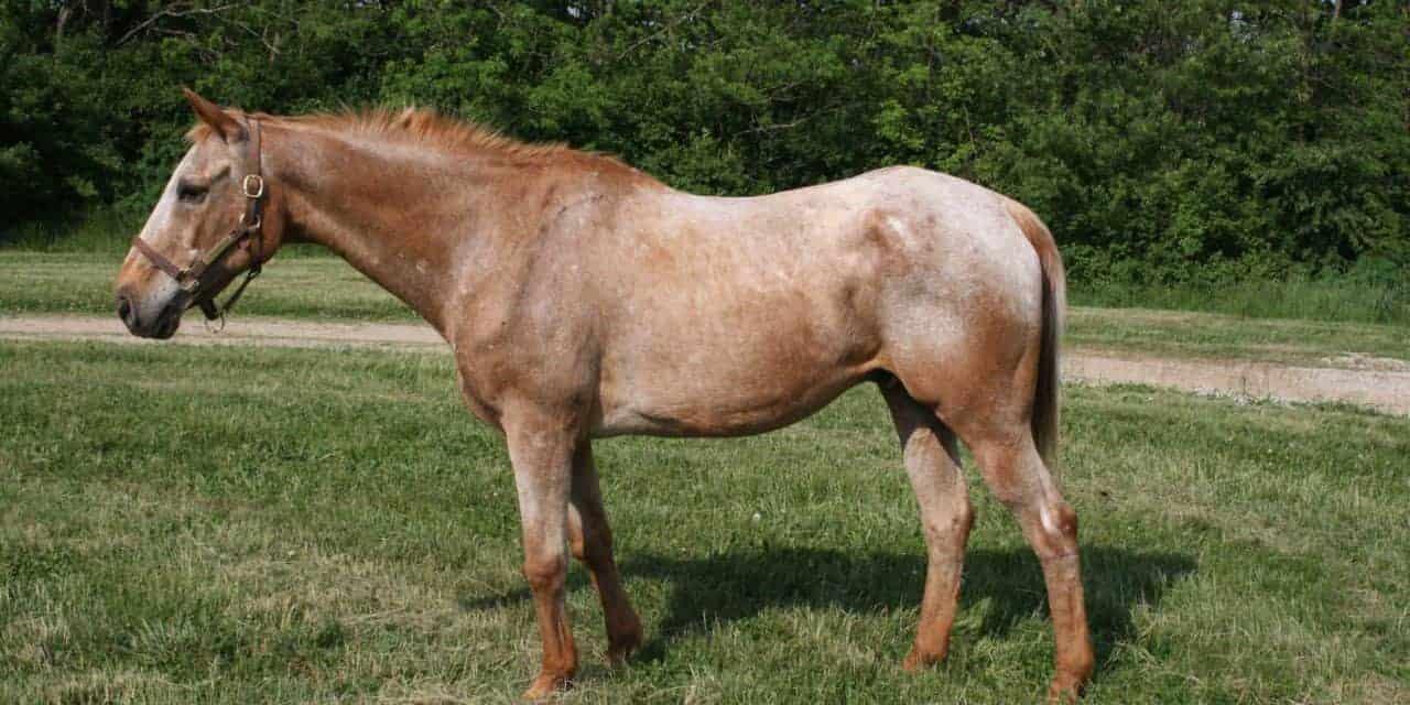 Customizing Senior Horse Diets The Horse