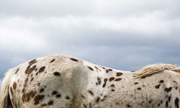 Equine Coat Color Genetics 101