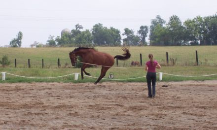 I Bought a Horse with a Behavior Problem. Now What?