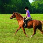 Age-Related Arterial Hardening and Sudden Death in Horses