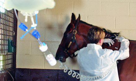Identifying and Managing Acute Rhabdomyolysis in Horses