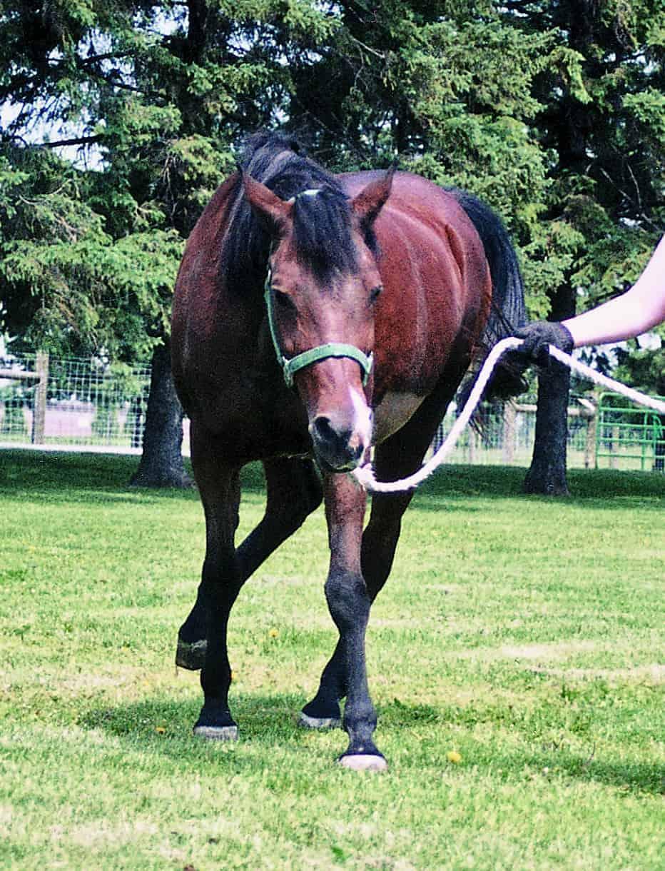 Rabies In Horse - HD932×1220