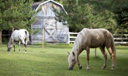 Thwarting Horse Thieves