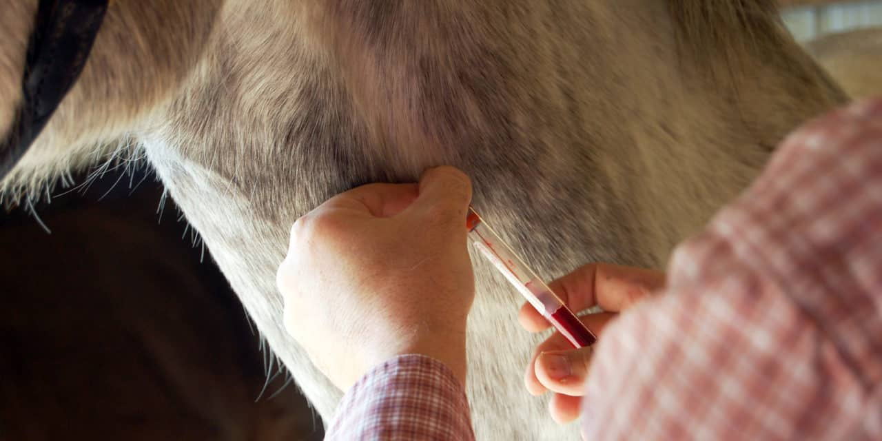 What is SAA, and Why is it Important to Equine Medicine?