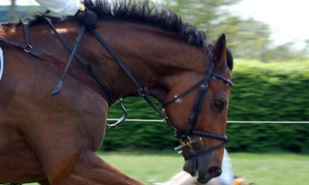 Ultrasound Exams for Diagnosing Roaring in Horses