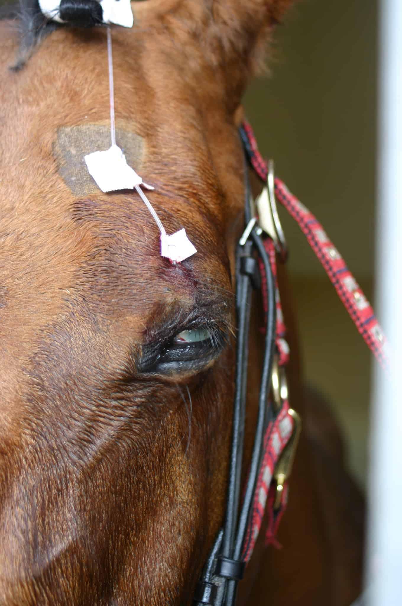 equine health revi due - HD1360×2048
