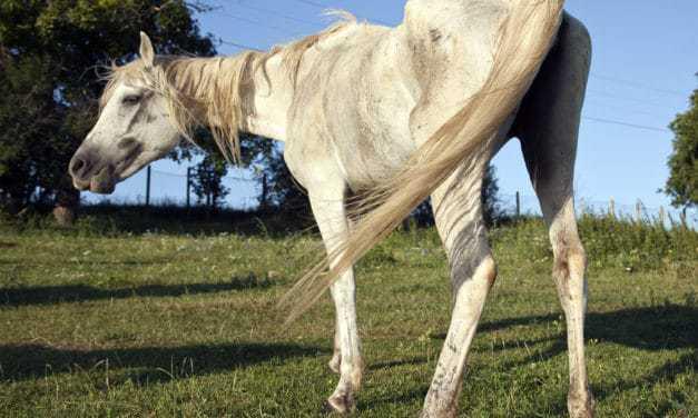 Animal Cruelty Crime Reports Fall Amid COVID-19 Lockdowns