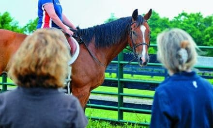 Options for Ex-Racehorses