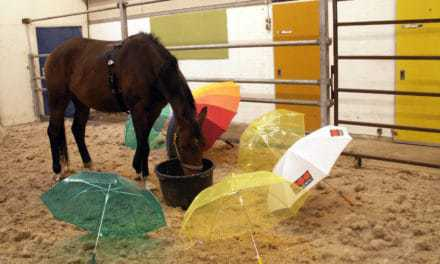 Encourage Horses to Pass Scary Objects, Scientists Recommend