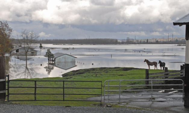 How Much Food and Water do My Horses Need if I Evacuate?
