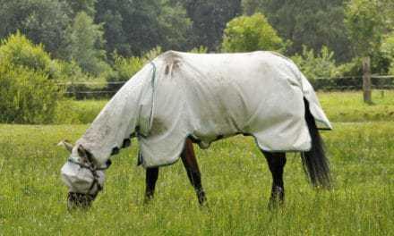 Poll Recap: Sun Protection for Horses