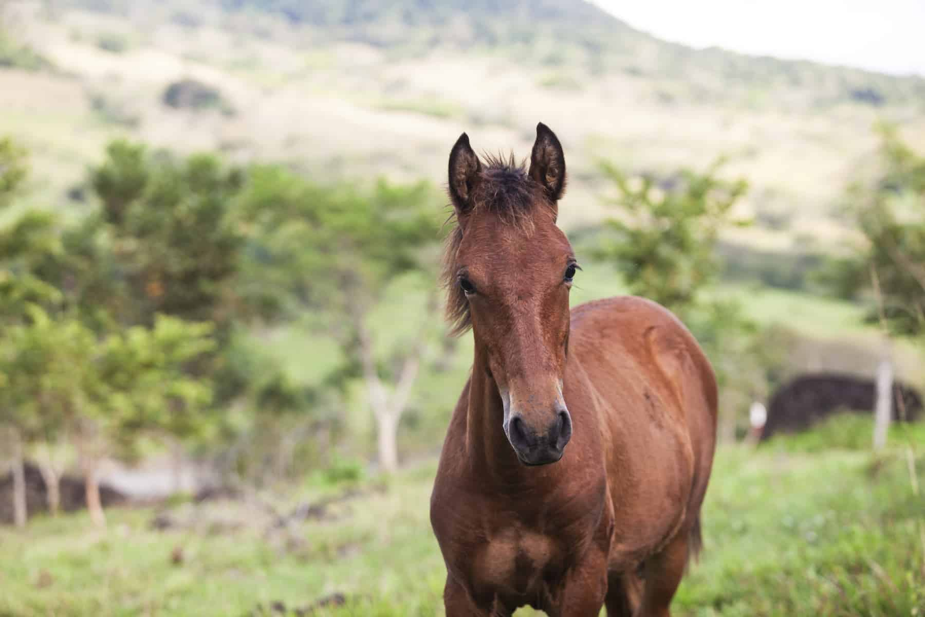Growing Up: Estimating Adult Size in Horses