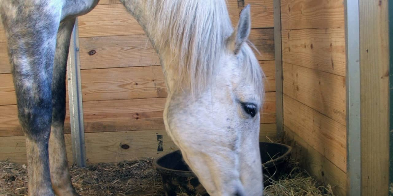 Study Examines Most 'Physically Effective Fiber' for Horses