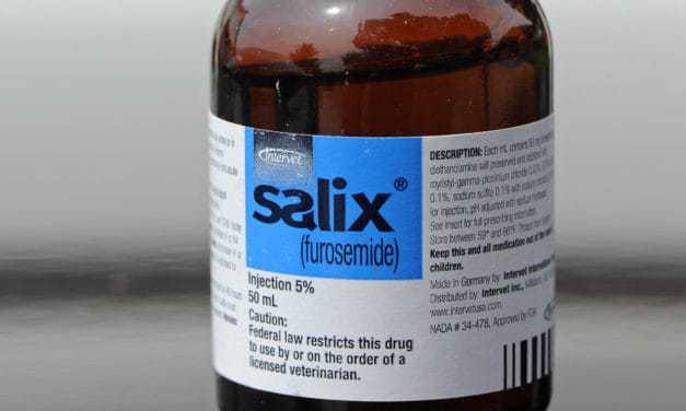 AQHA to Examine Furosemide Ban for Show Horses