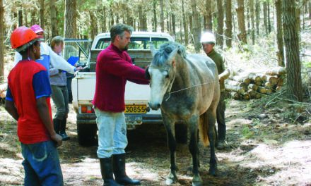 New African Horse Sickness Recognition Regulations Adopted
