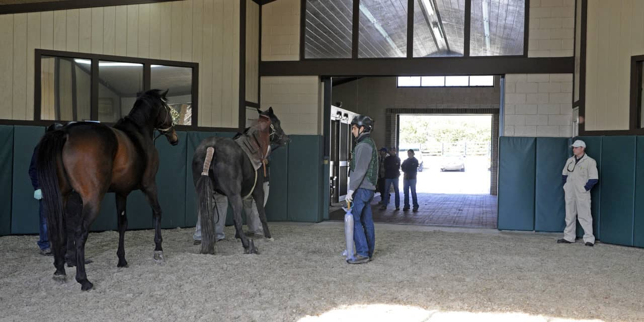 Building a Horse Breeding Shed – The Horse