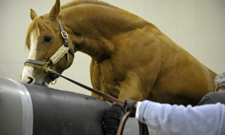 CEM: What Every Stallion Owner Should Know