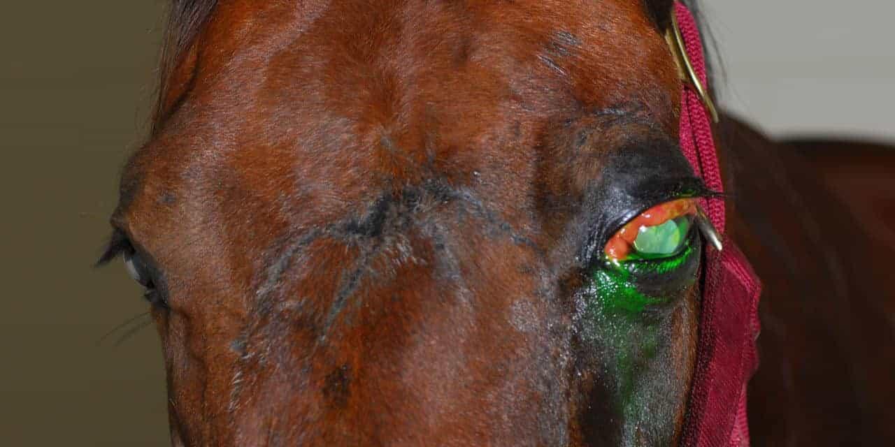 Understanding Equine Orbit and Periorbita Problems – The Horse