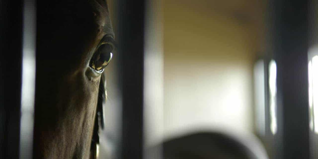 Mobile Blue Light Therapy for Broodmares