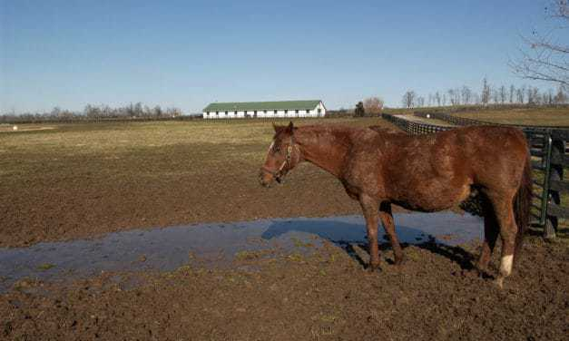 Mud Management: Key to Horse Health, Safety During Wet Weather