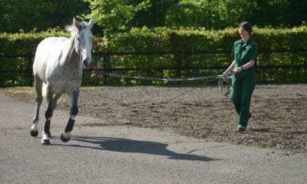 Limb Sensors for Equine Diagnostics, Performance Evaluations