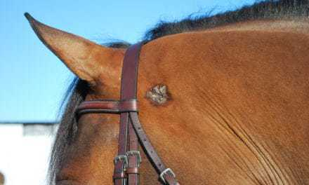 Laser Surgery for Equine Sarcoid Removal Evaluated