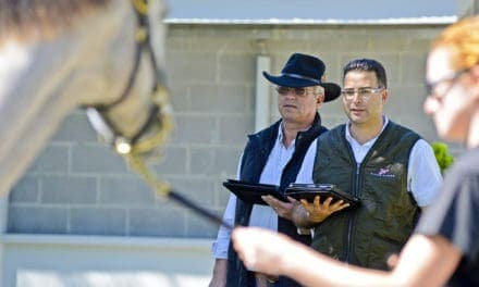 How to Address an Old Racing Injury When Selling a Horse