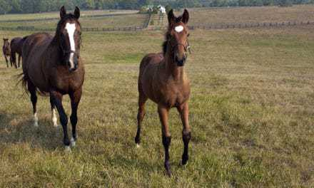 When Should Foals Be Dewormed?