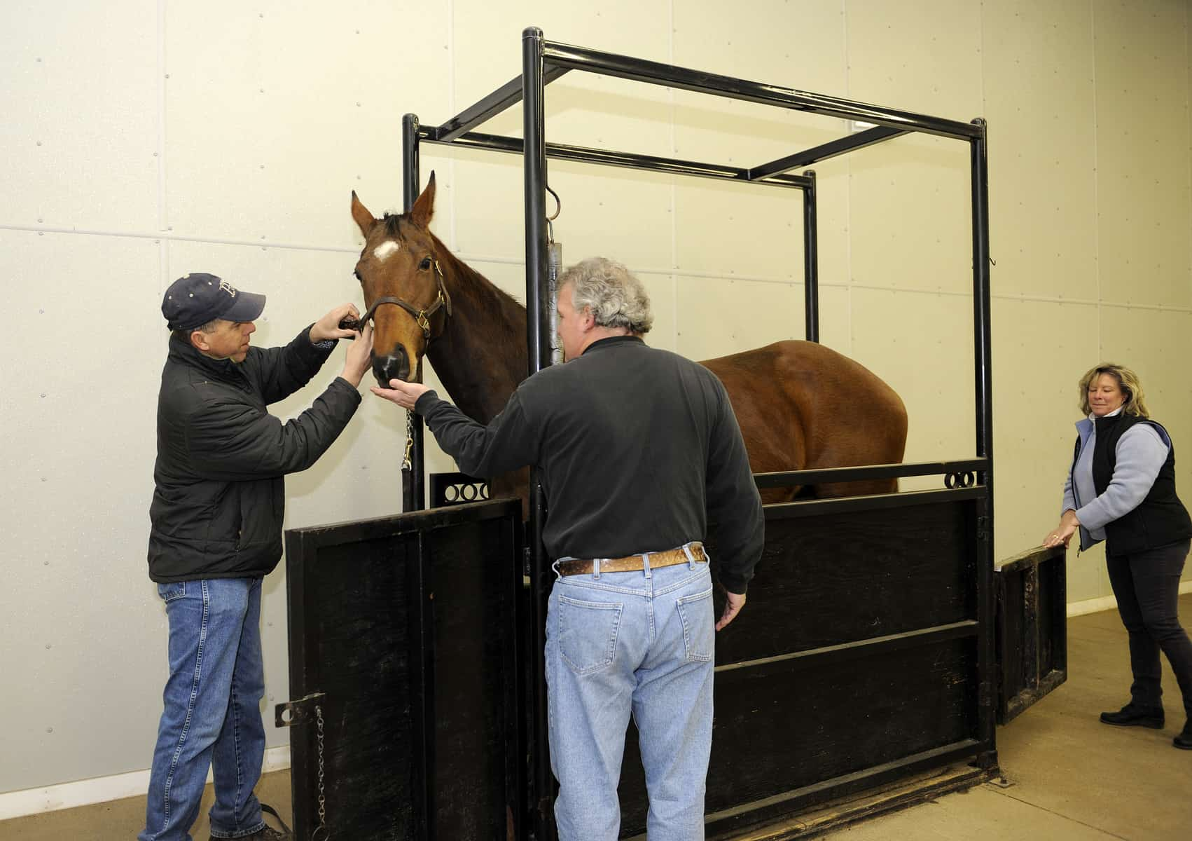 8 Steps to Breeding Your Mare