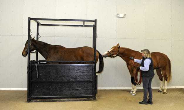 Top Equine Reproduction Studies of 2014