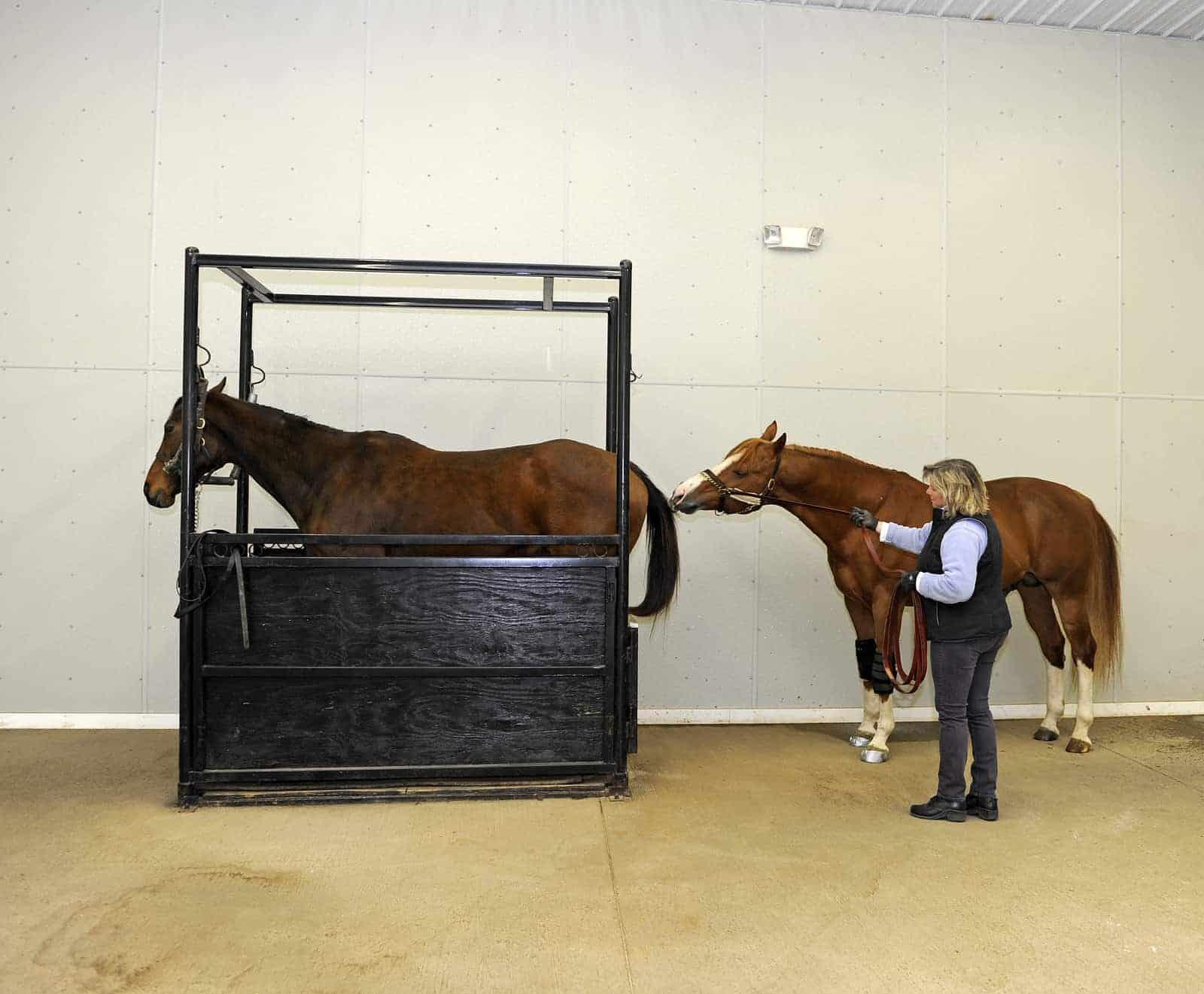 Understanding Breeding Soundness Exams For Stallions The Horse