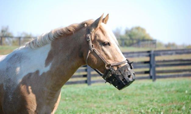 Researchers Study Muzzled Horse Behavior