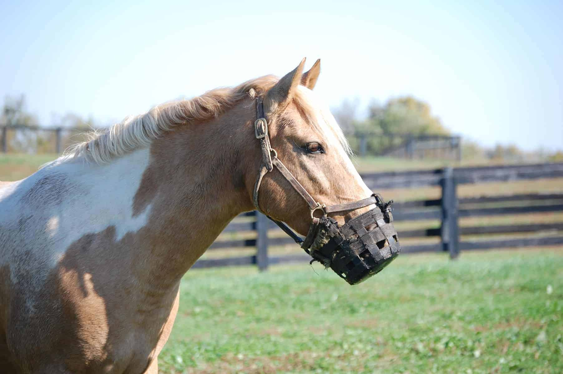 Choosing a Horse Grazing Muzzle – The Horse