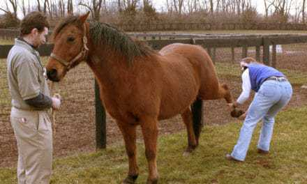 Physical Therapy for Stifle Problems in Horses
