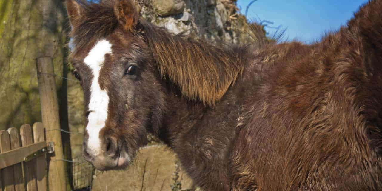 Managing Equine Cushing's Disease