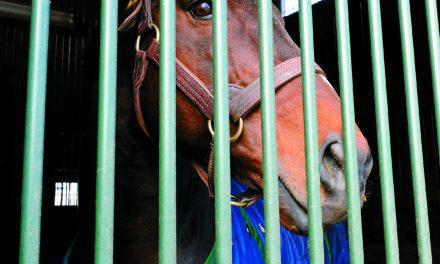 Bramlage: Rest Needed to Keep Horses Sound