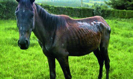 Equine Cruelty Investigations