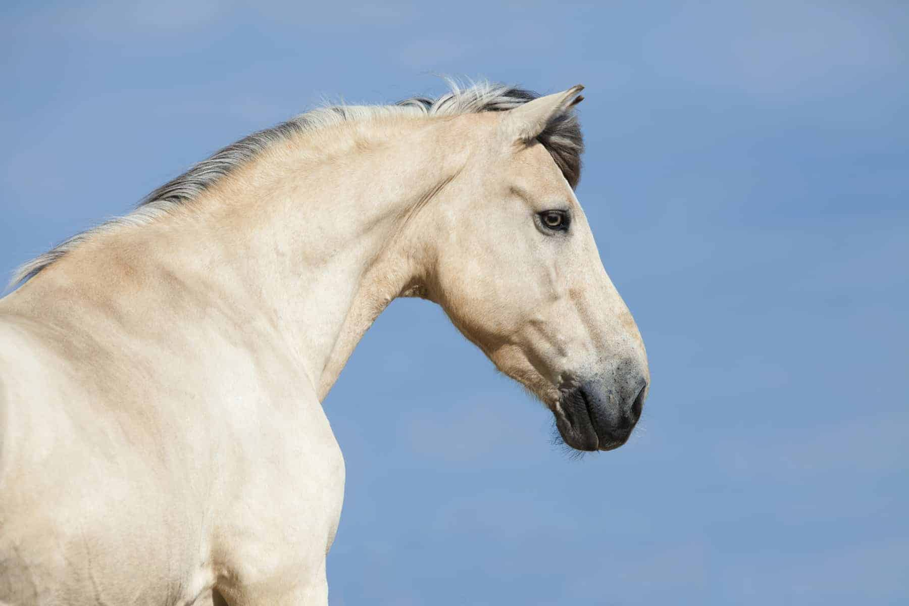 Could Horses' Neck Postures Indicate Back Pain?