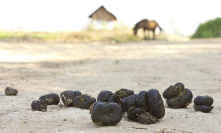 The Rules of 'Poopspection': Analyzing Your Horses' Manure