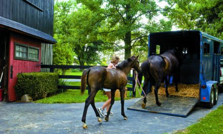 Planning for Equine Evacuations During Hurricanes