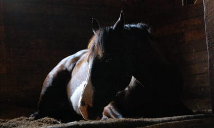 Challenging Nature on Equine Infectious Diseases
