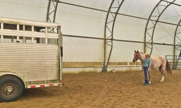 What is an Equine Behaviorist?