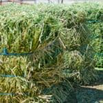 4 Misconceptions About Alfalfa