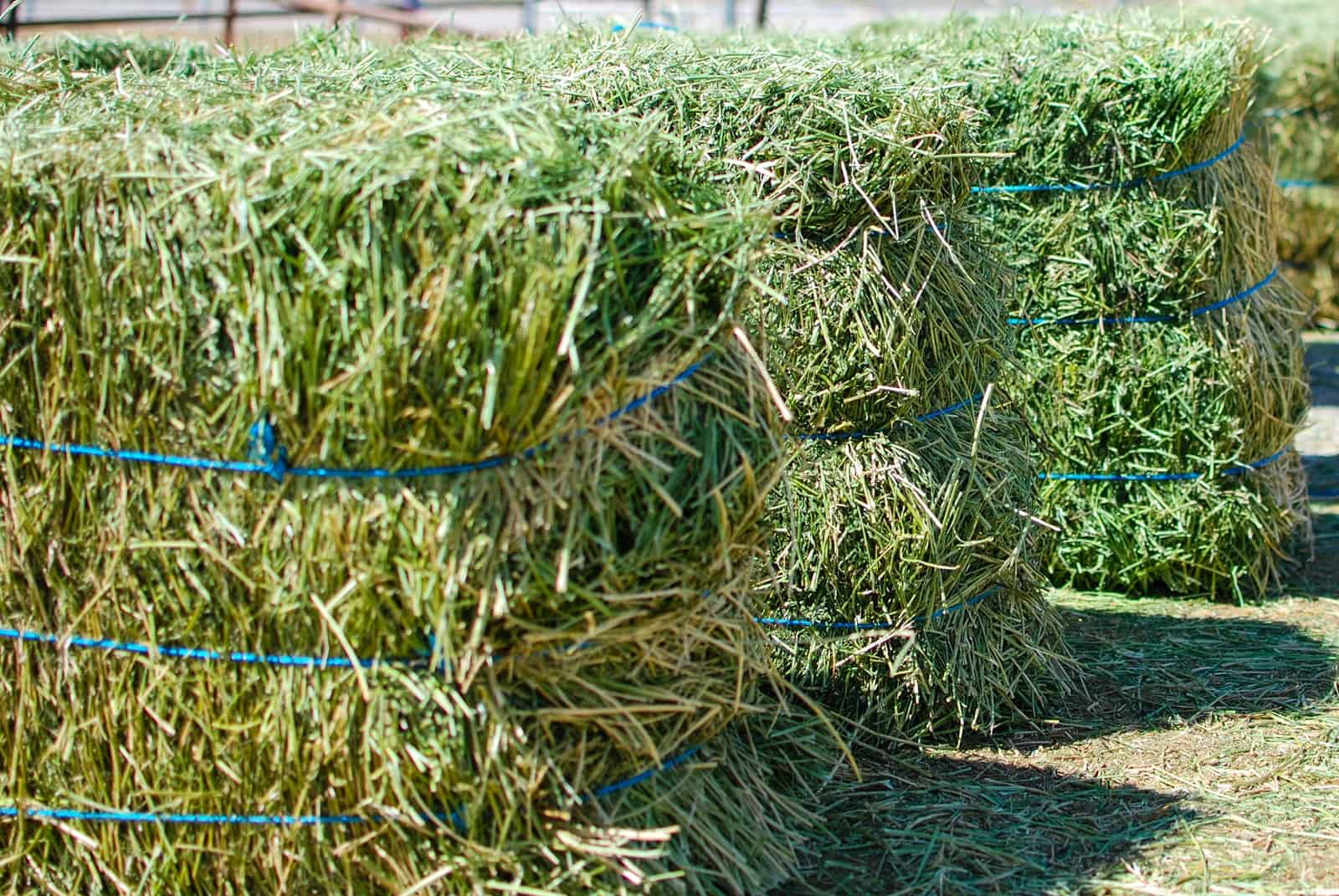 All About Feeding Horses Alfalfa – The Horse