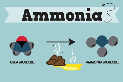 Infographic: How Ammonia Impacts Your Horse