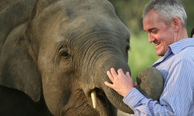 On Equine Research, Empathy … and Elephants