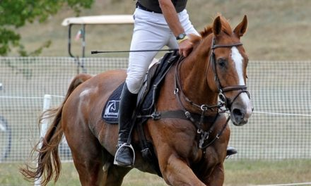 Study: New Zealand's Sport Horse Industry worth $1 Billion Annually