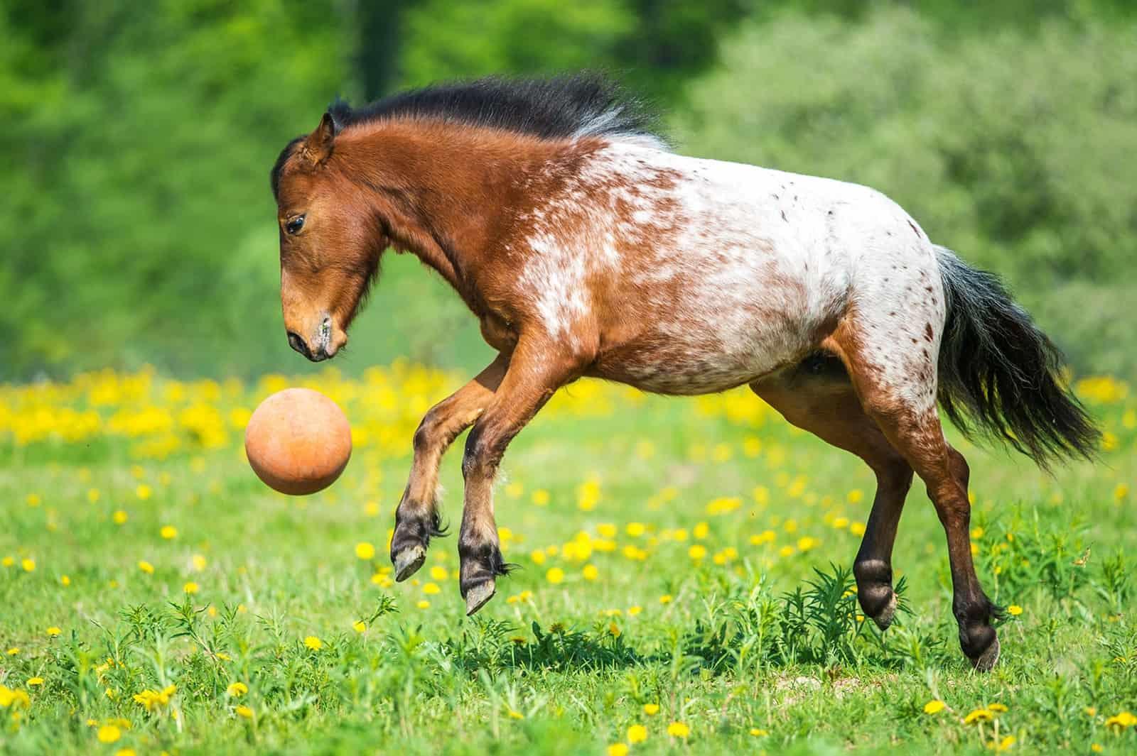 Poll Recap: Enriching Your Horse's Environment – The Horse