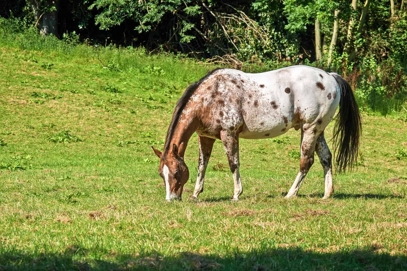 What is Leptospirosis? – The Horse