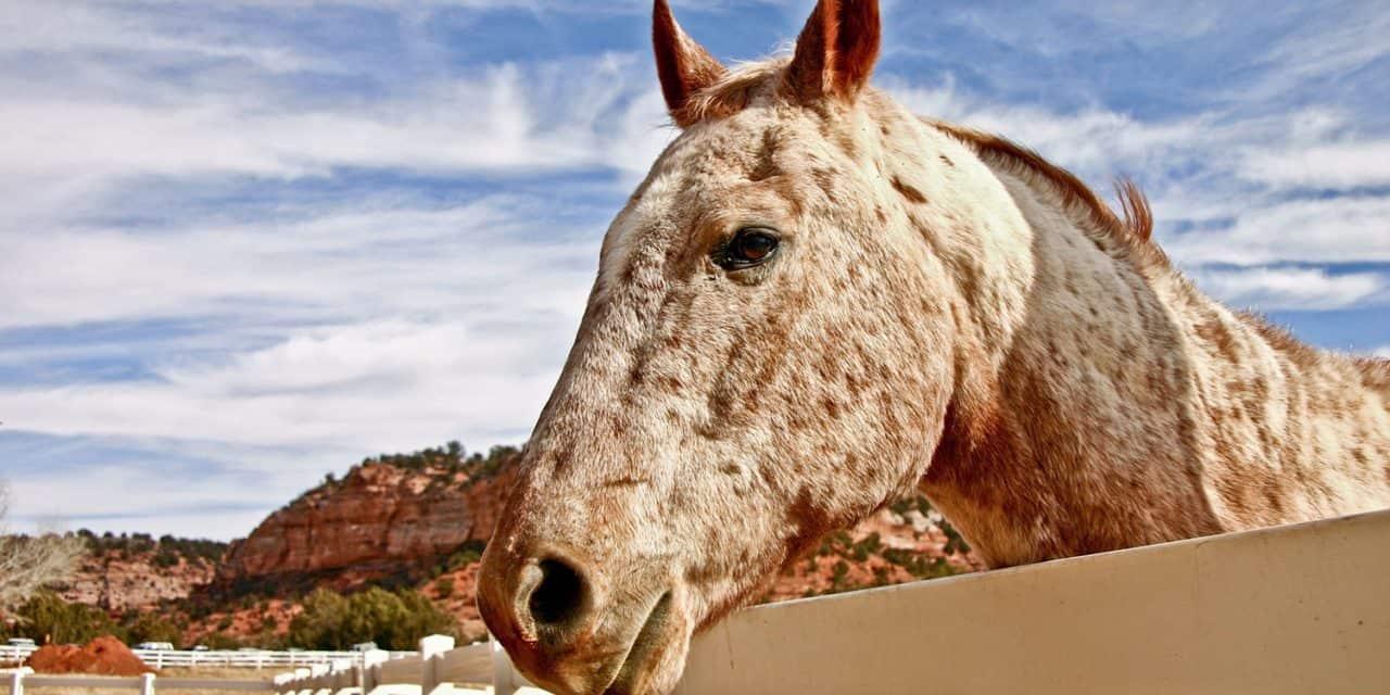 Desert horse keeping the horse desert horse keeping fandeluxe Images